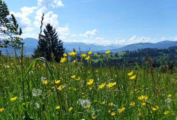 nature, meadow, mountains